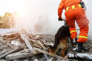 Search and rescue forces conducting rescue operation during a natural disaster